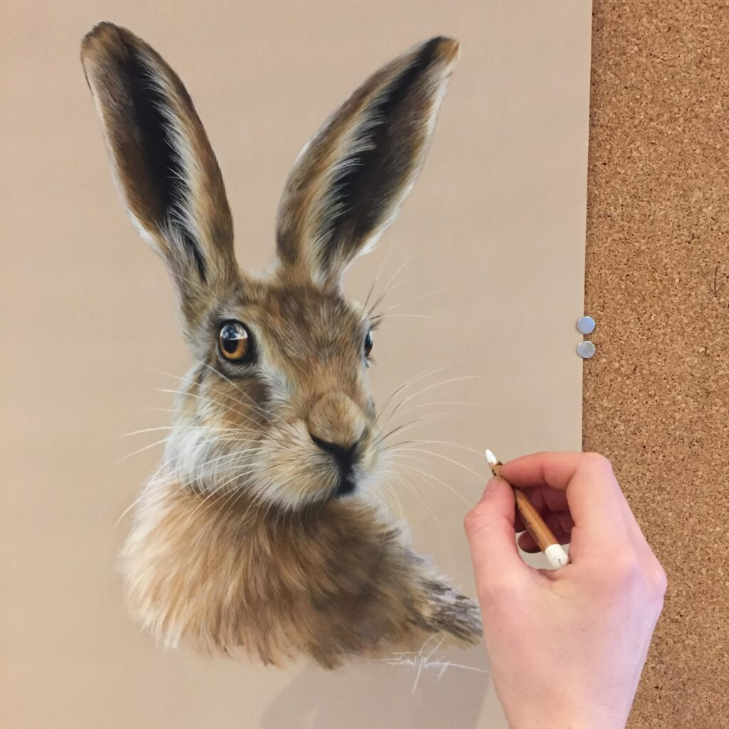 wildlife art hare drawing in pastel pencils