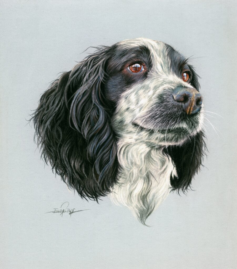 Spaniel Drawing, Spaniel, Blue Roawn Spaniel, pet portrait, drawing, pastl, artist, art, dog, dog art, draw my dog, sommissioned pet portrait art, commission art, dog painting