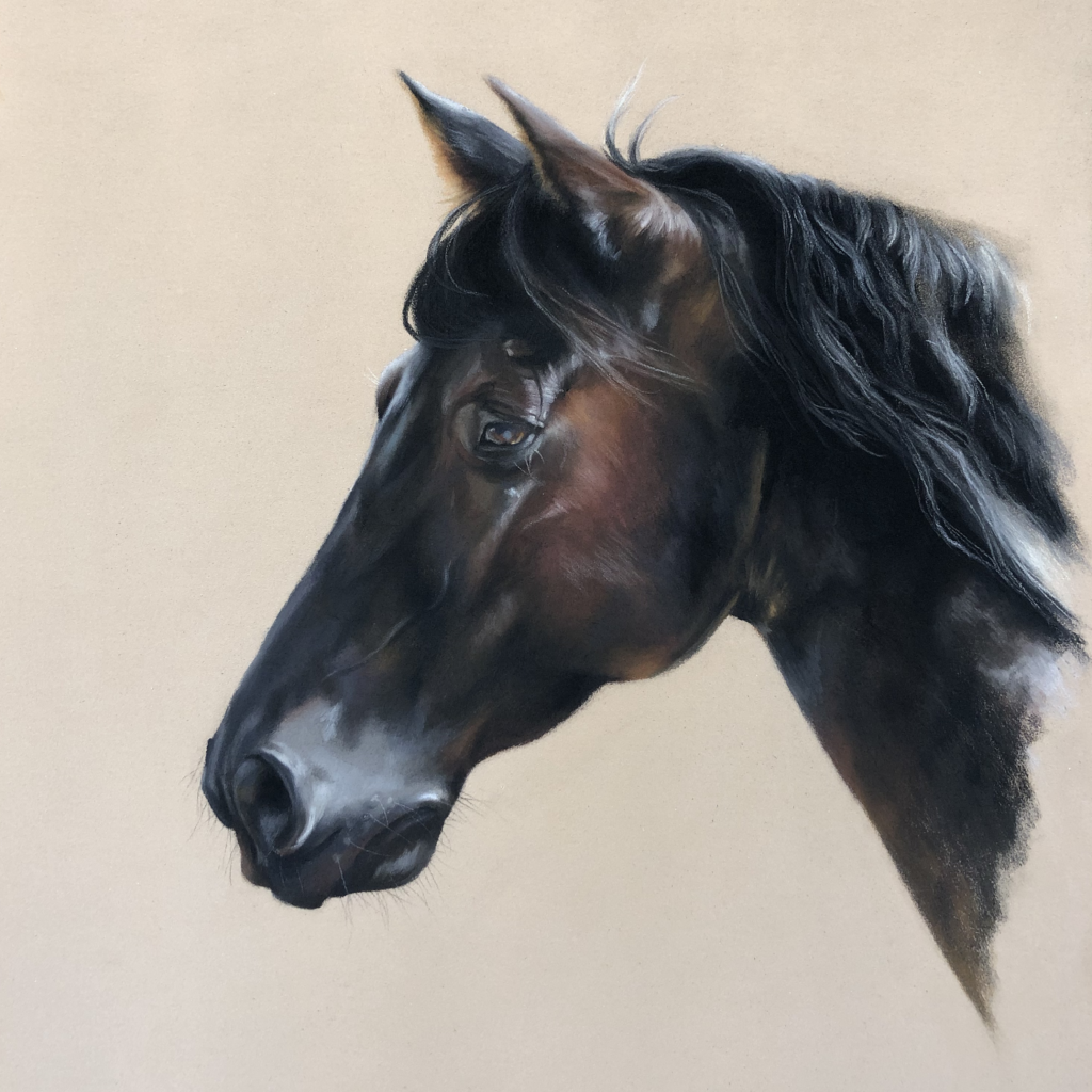 pastel pencil drawing of a horse