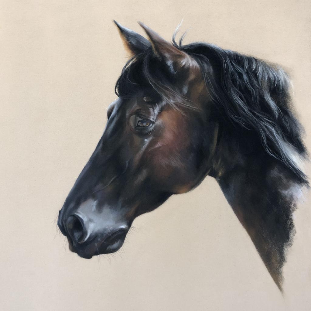 horse, portrait, equine, art, euine artist, drawing, horse drawing, horse art, thoroughbred, spanish horse, black horse, pastel artist, pastel drawing, pastel horse drawing, pastel horse painting, horse portrait,