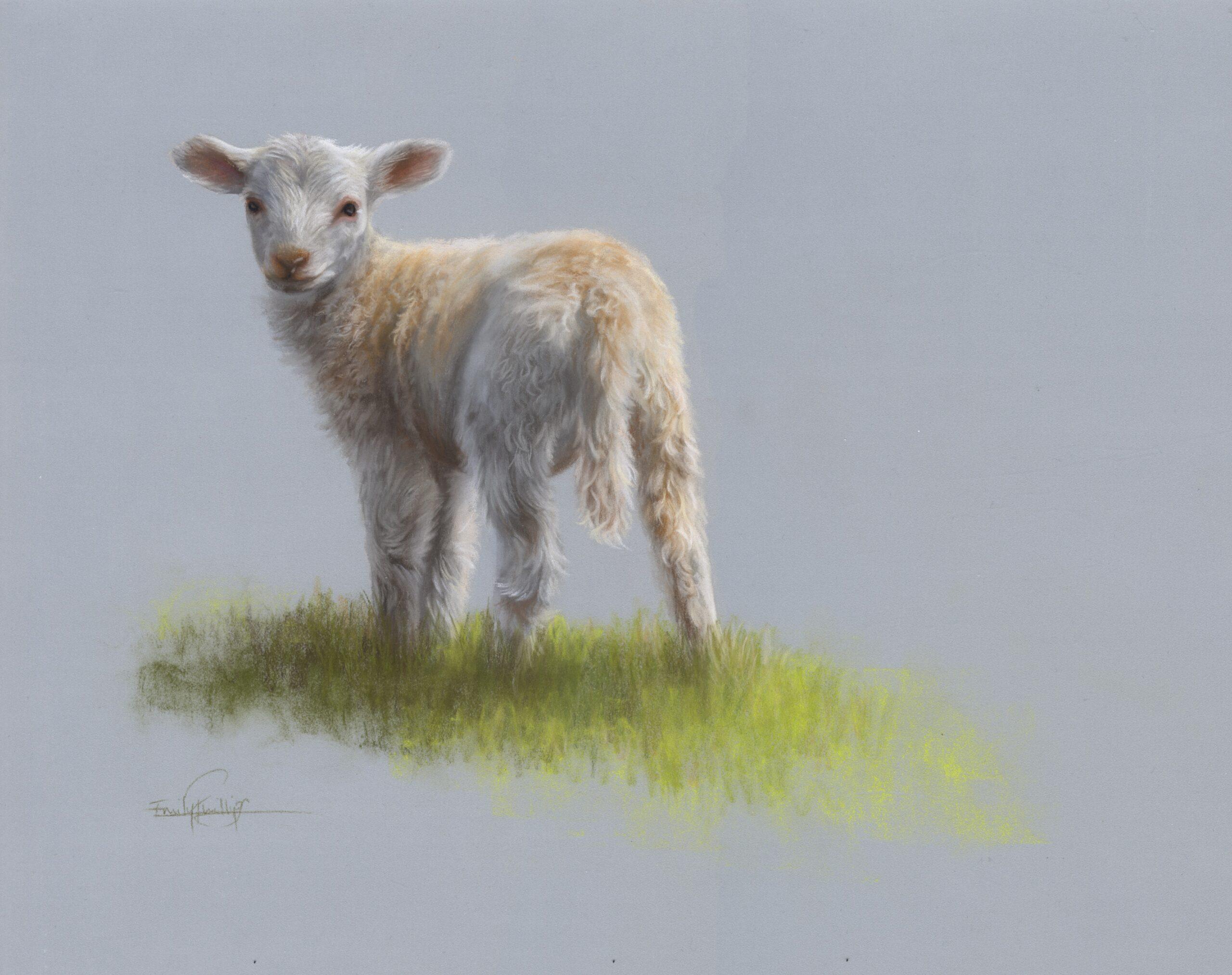 lamb drawing in pastel pencils - white fur drawing