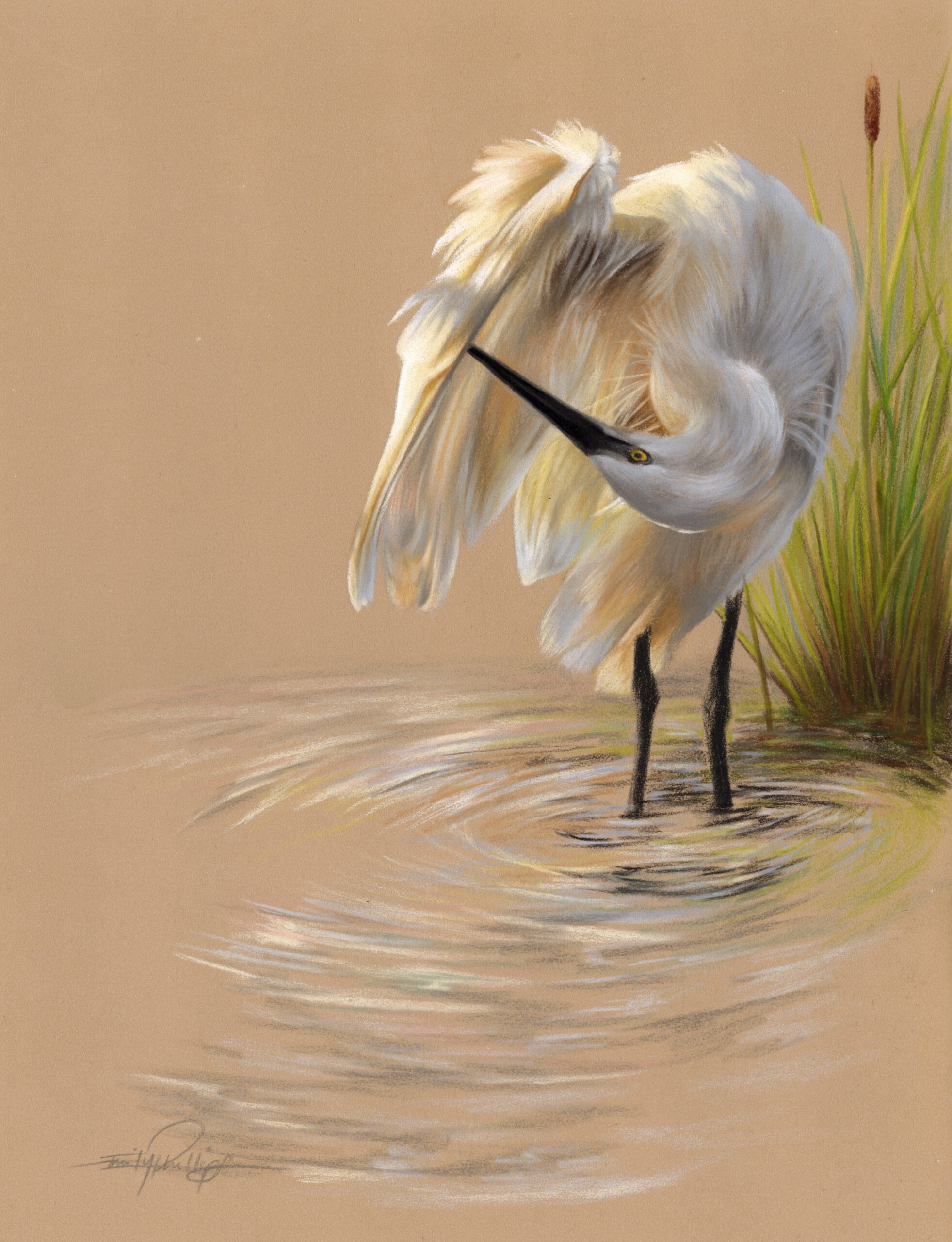 white feathers in pastel pencils