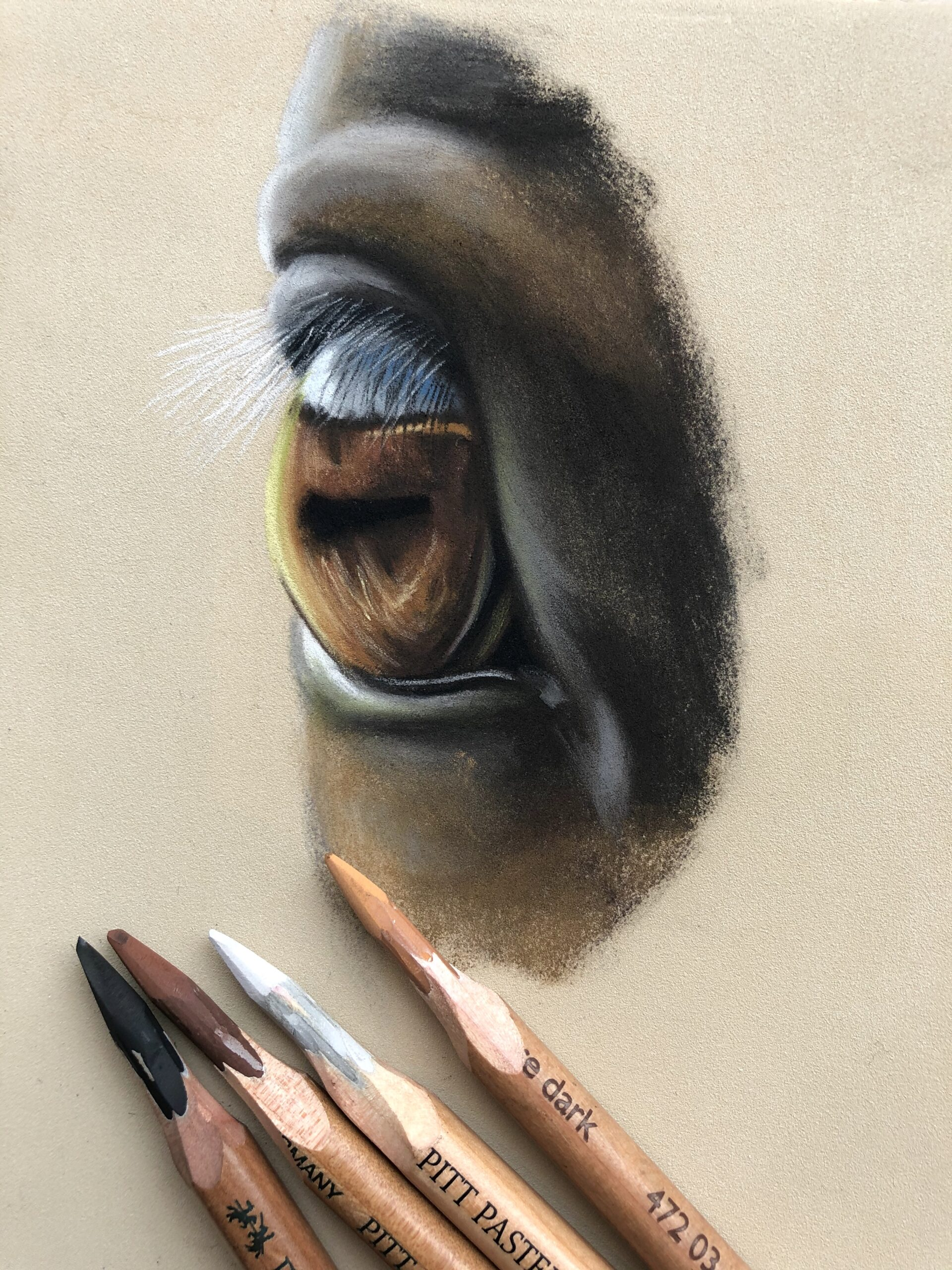 horse eye art class example