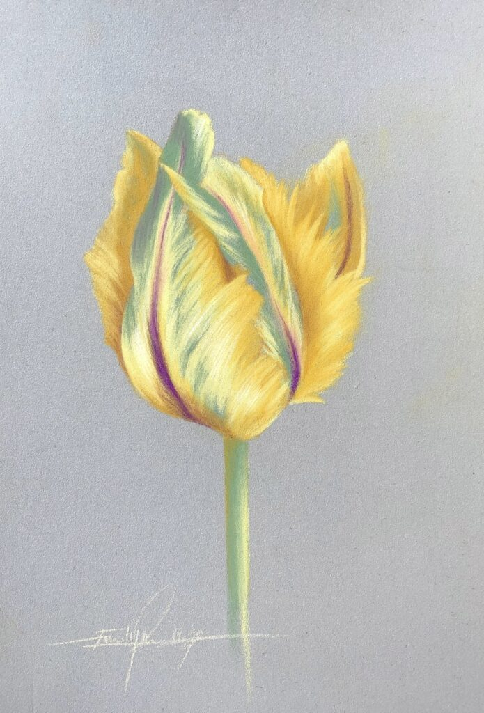 tulip, yellow, purple, green, flower, yellow flower, purple flower, pastel pencil, pastel art, pastel drawing, artist, how to draw, flower lesson, how to draw a flower