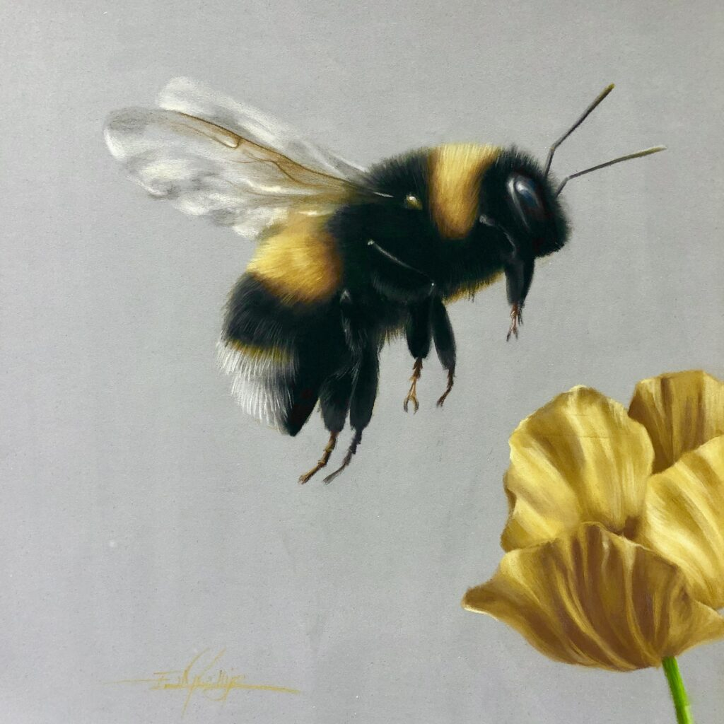 bee, bee drawing, pastel pencil art, pastel bee, bumble bee, white tailed bee, poppy, yellow poppy drawing, pastel drawing, learn to draw, pastel classes, art class, art workshop