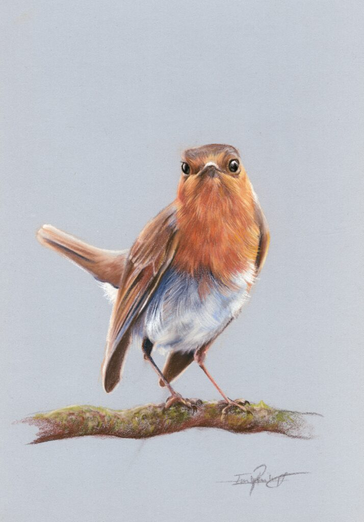 Robin art workshop in pastel pencils