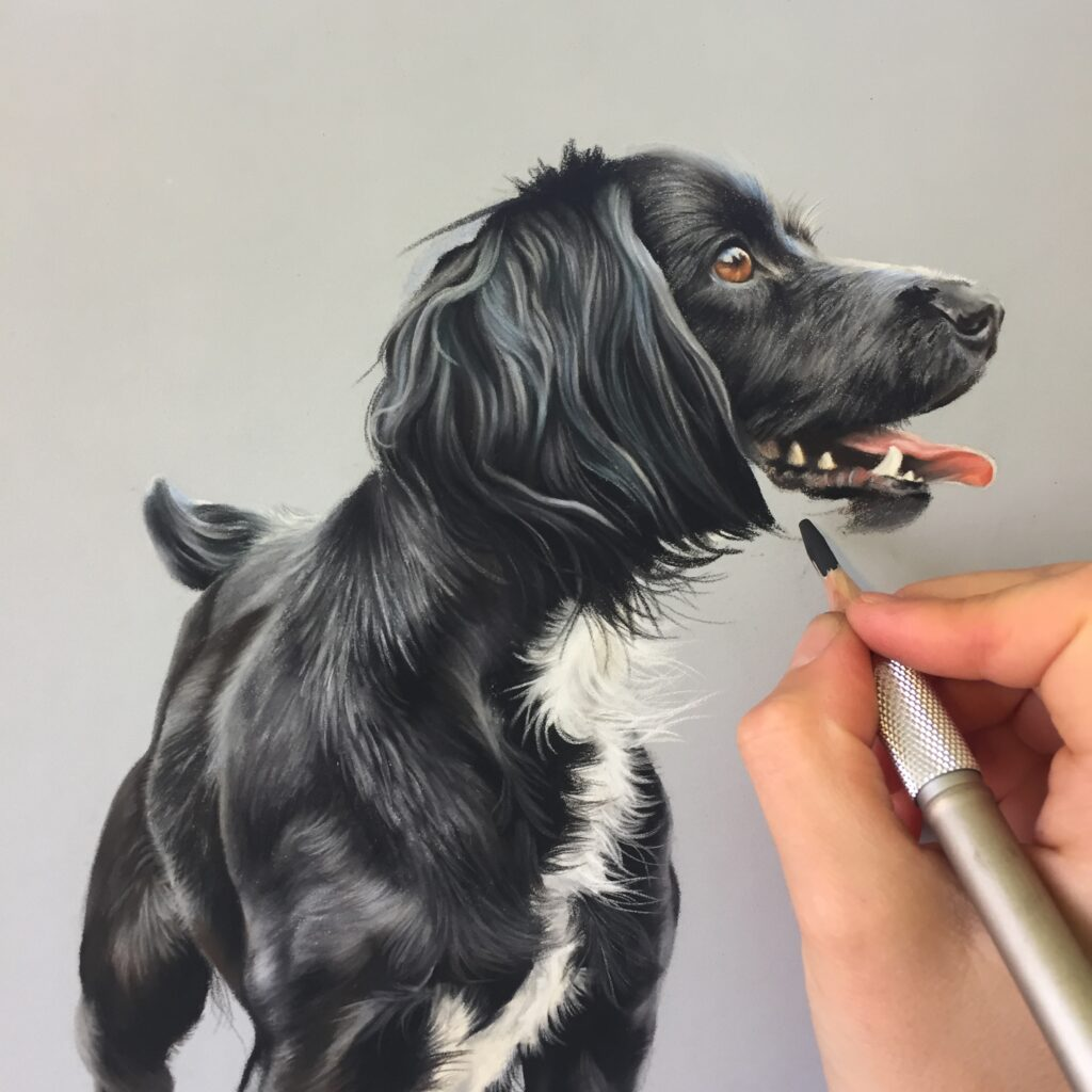 pet portrait process being drawn from a photo