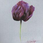 purple tulip drawing tutorial