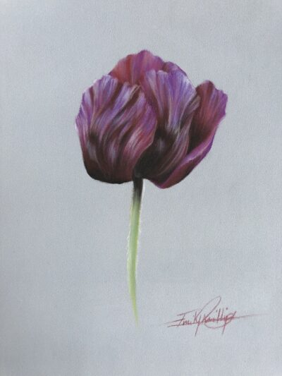 Botanical Drawing Class in Pastels: An Opulent Purple Poppy