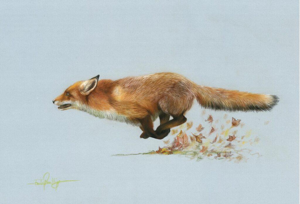 original pastel pencil drawing of red fox running
