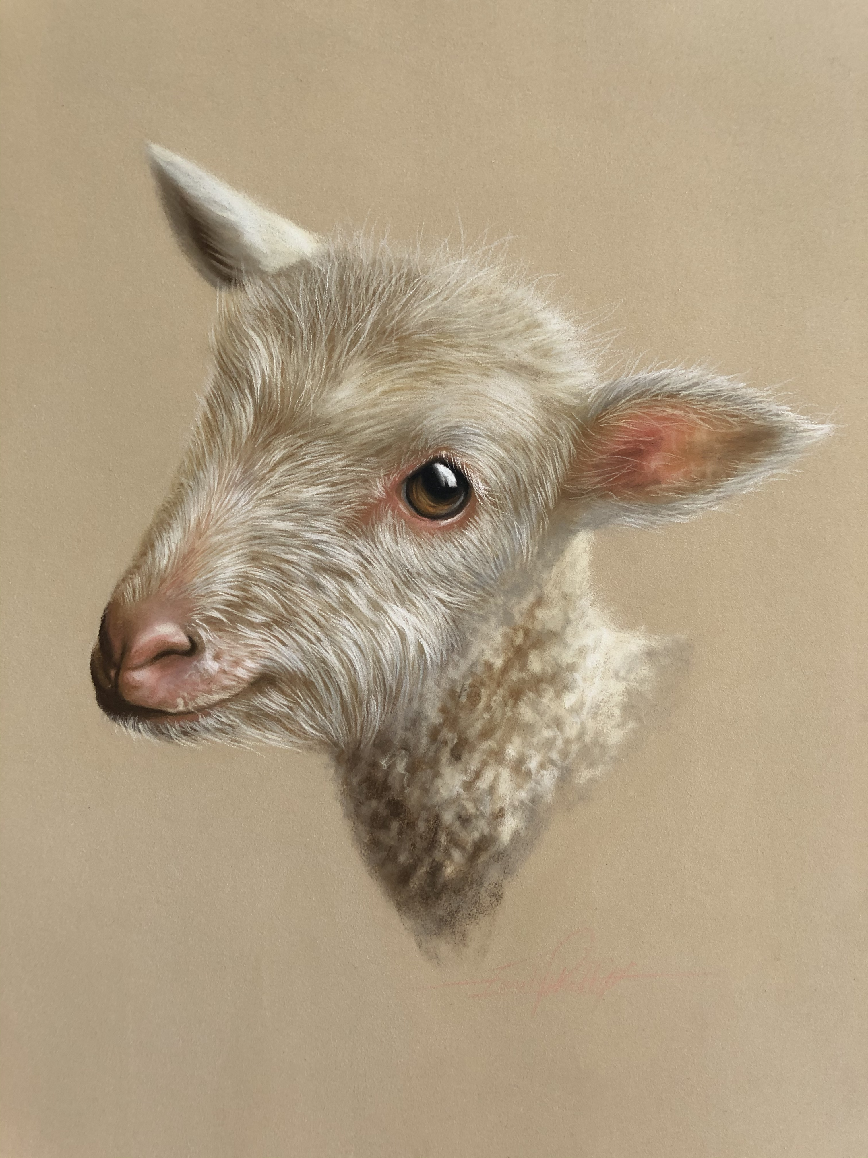 lamb drawing in white pastel pencils