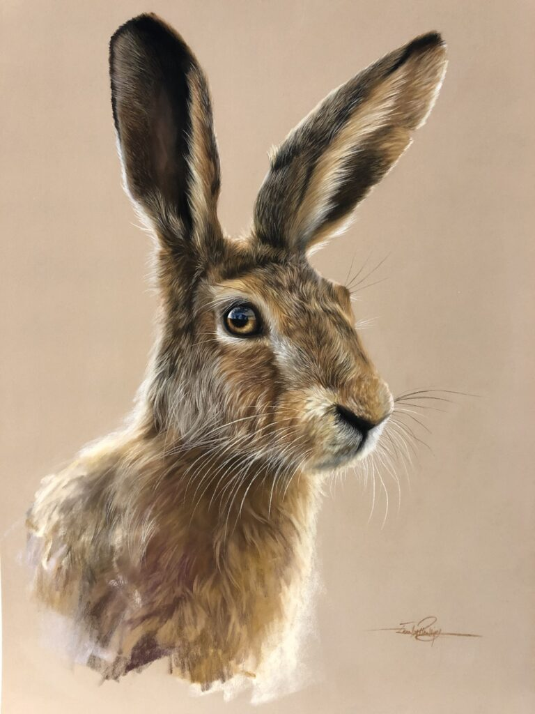 hare drawing hyper realistic drawing to be exhibited
