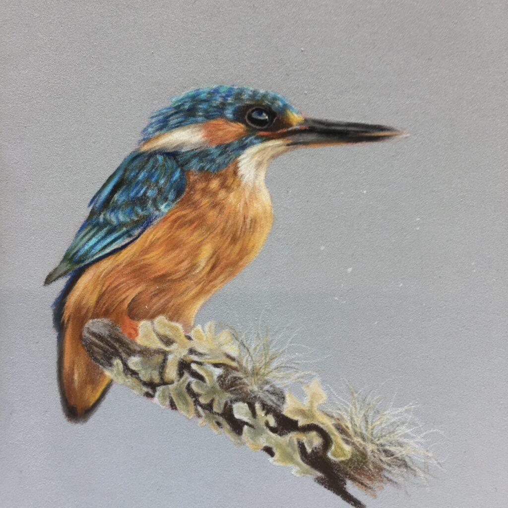 Kingfisher drawing art workshop