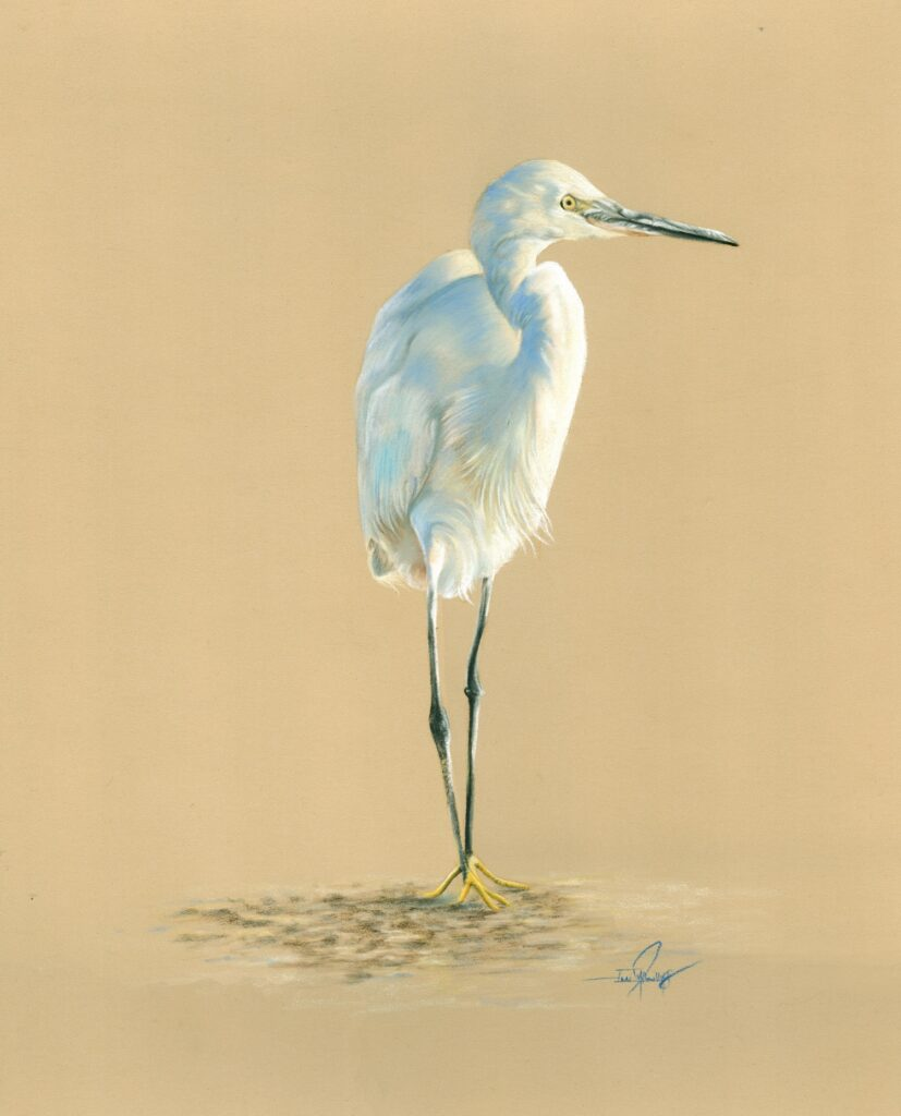 Egret in pastel pencils drawing workshop