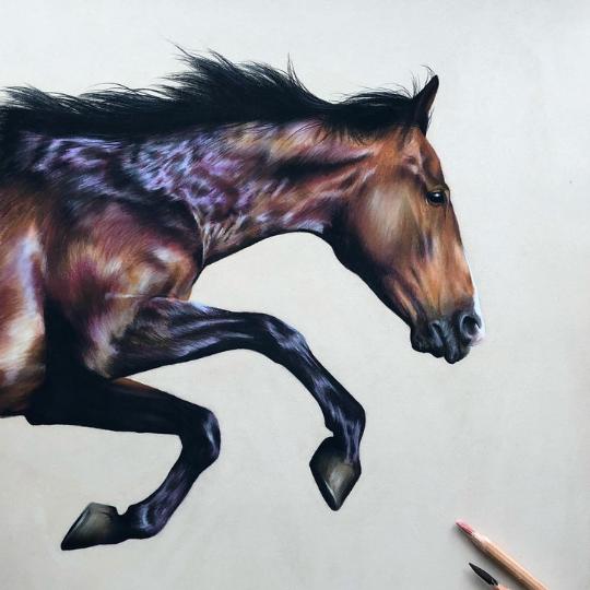 Running horse drawing