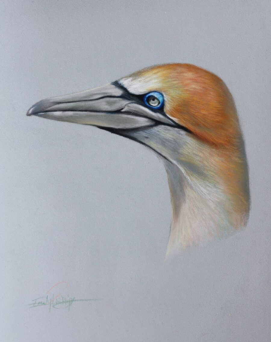 Let's Draw a Gannet in Green and Pink