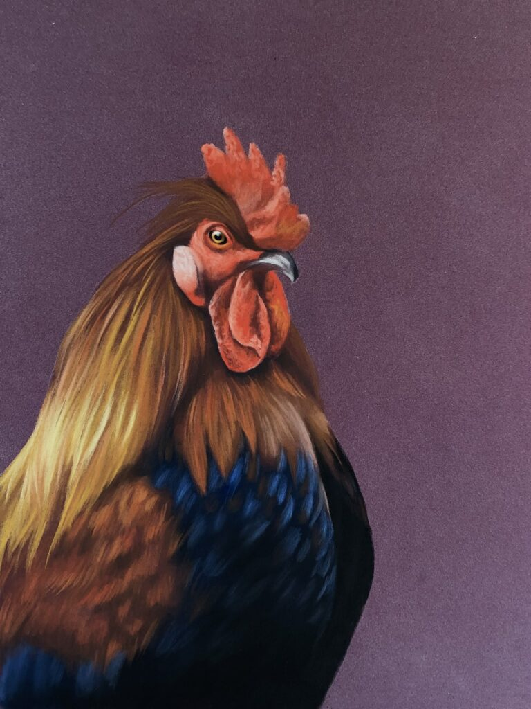 Rooster, Cockerel Drawing